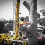 Arbortec Tree Service Pty Ltd